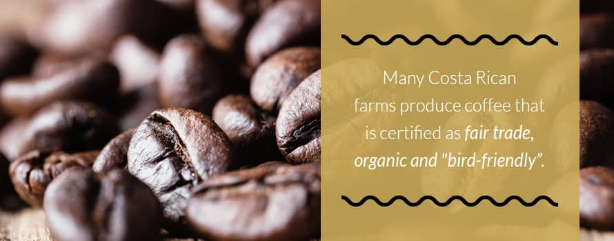Costa Rican Coffee Growing Practices