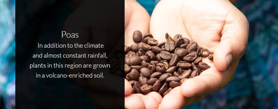 Poas Costa Rican Coffee