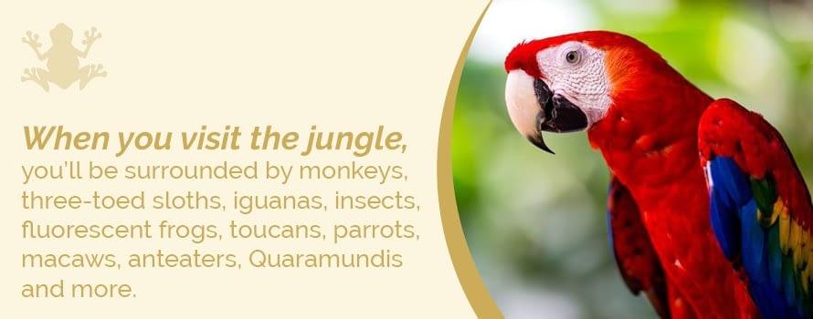 wildlife in manuel antonio