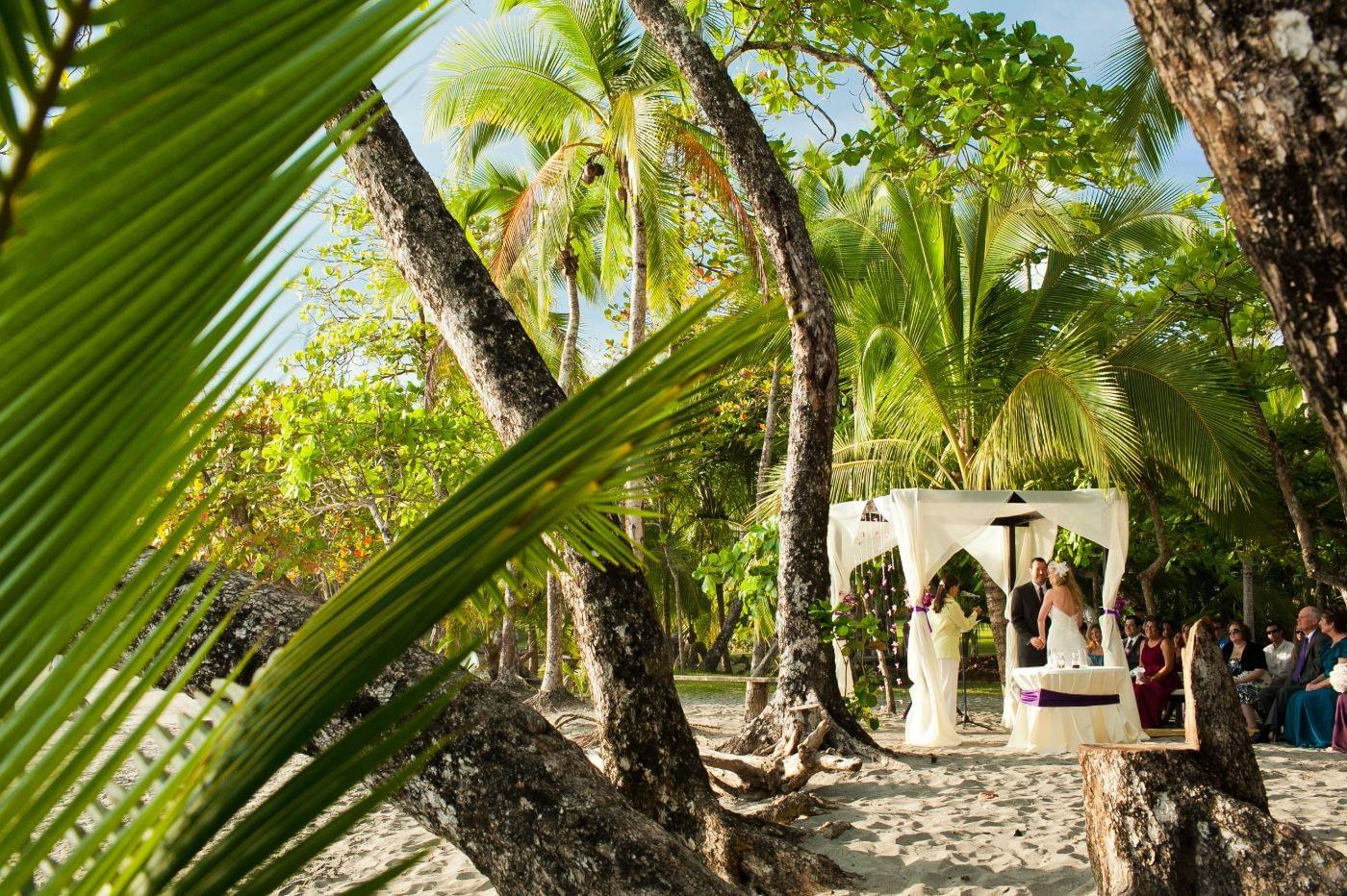 Beach & Rainforest